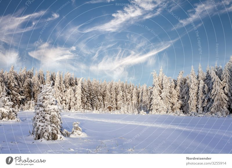 winter Calm Trip Winter Snow Winter vacation Hiking Feasts & Celebrations Christmas & Advent New Year's Eve Nature Landscape Sky Clouds Climate