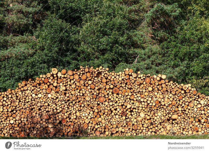 timber harvest Work and employment Economy Agriculture Forestry Logistics Energy industry Beautiful weather Tree Wood Brown Green Sustainability Stack of wood