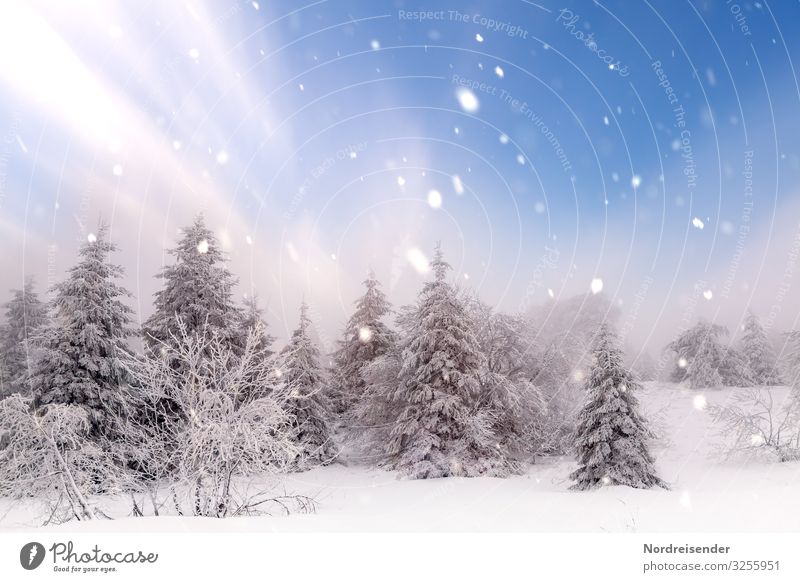 Sky Nature Christmas & Advent Landscape Sun Tree Relaxation Calm Forest Winter Snow Feasts & Celebrations Trip Snowfall Ice Dream