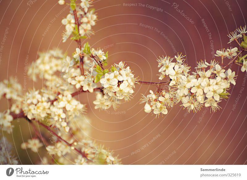 Nature Plant Beautiful Colour Calm Environment Blossom Spring Happy Park Contentment Field Growth Bushes Energy Joie de vivre (Vitality)