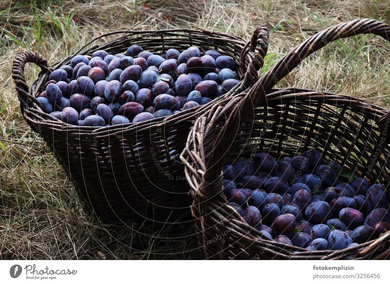 Plums basket Food Fruit Nutrition Organic produce Fruit basket Basket Healthy Eating Thanksgiving Autumn Field Fresh Delicious Natural Blue Violet Romance
