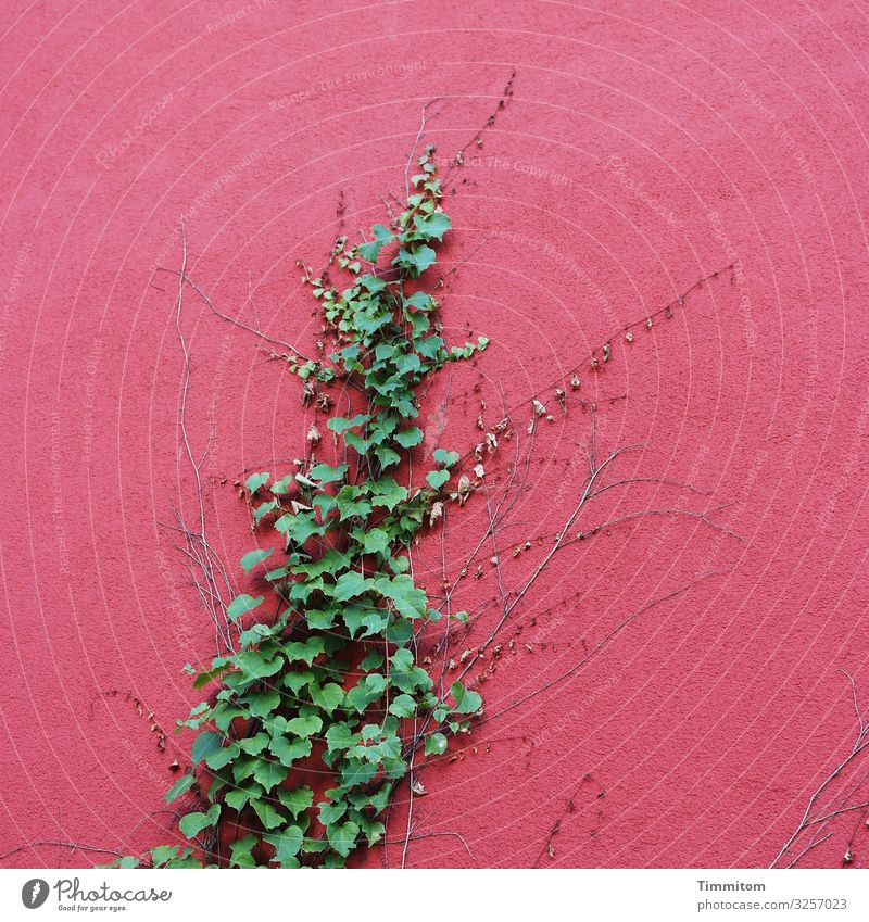growth Environment Plant Ivy Karlsruhe House (Residential Structure) Industrial plant Wall (barrier) Wall (building) Facade Growth Esthetic Crazy Green Red