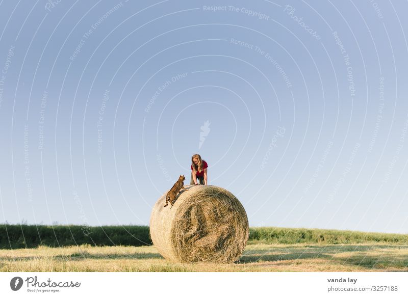 Land idyll - child on bale of straw with cat Child Summer girl Sky Infancy Field Exterior shot Landscape Environment Beautiful weather 3 - 8 years Agriculture