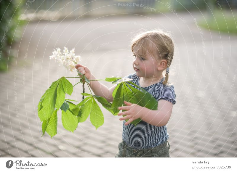 Human being Child Plant Tree Leaf Girl Blossom Spring Park Leisure and hobbies Infancy Observe Toddler Research Chestnut tree 3 - 8 years
