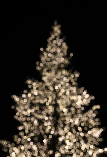 Xmas Tree Lifestyle Style Design Decoration Night life Feasts & Celebrations Christmas & Advent Environment Winter Spruce Fir tree Christmas tree Glittering