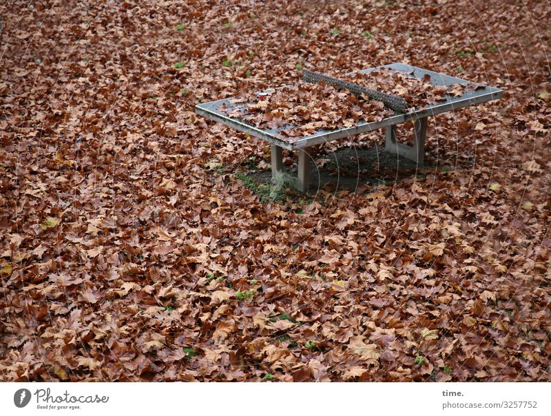 winter break Sporting Complex Table tennis Table tennis table Environment Nature Autumn Leaf Autumn leaves Calm Fatigue Exhaustion Apocalyptic sentiment