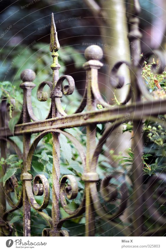 Pointies in the crown Living or residing Flat (apartment) Garden Old Historic Wrought iron Fence Metalware Art nouveau Rust Derelict Colour photo Exterior shot