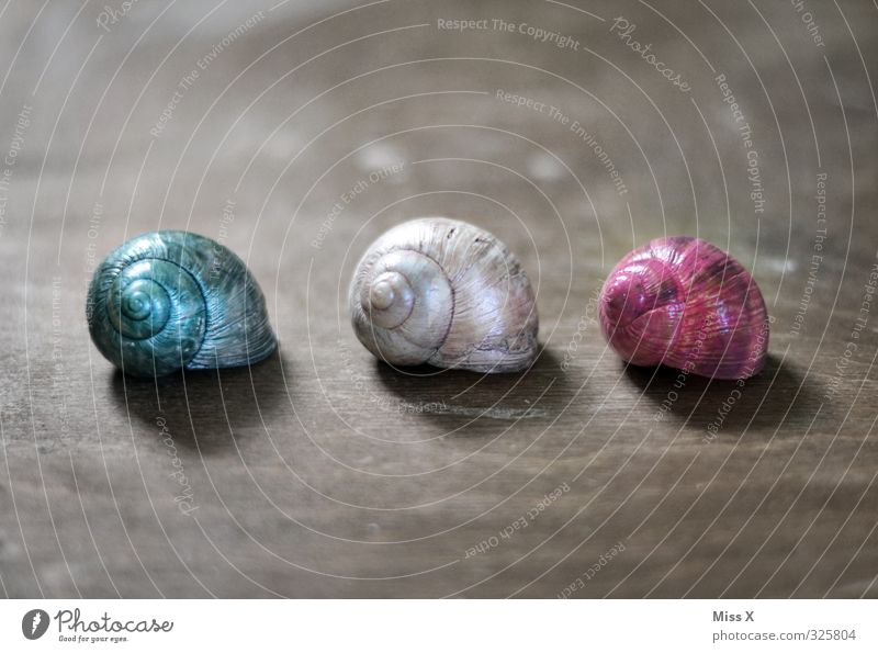 three snail shells Living or residing Flat (apartment) House (Residential Structure) Dream house Decoration Animal Snail 3 Group of animals Multicoloured Colour