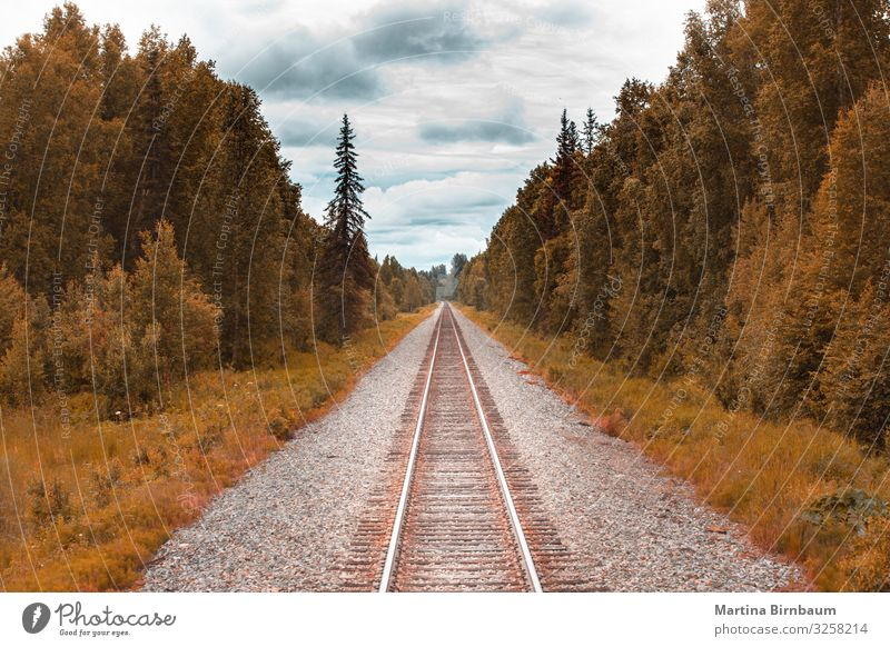 Railroad track in ther wilderness of Alaska Vacation & Travel Tourism Summer Snow Mountain Hiking Nature Landscape Tree Park Forest River Transport Natural Blue