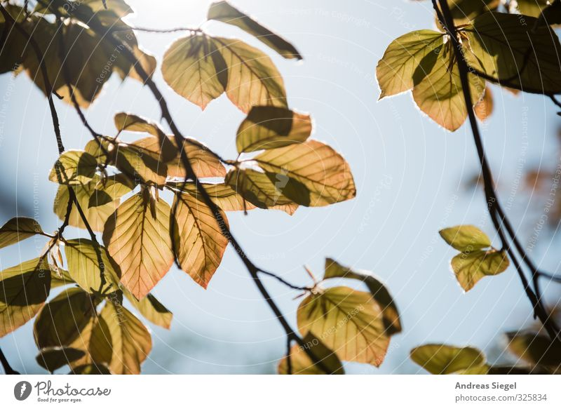 leaves Nature Plant Cloudless sky Spring Tree Leaf Friendliness Bright Twig Colour photo Exterior shot Detail Deserted Day Light Shadow Sunlight Back-light