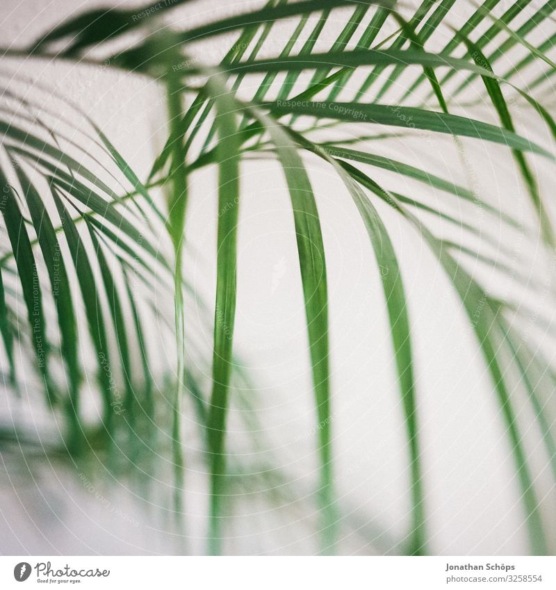 houseplant Plant Esthetic Contentment Houseplant Palm tree Interior shot White Green Pattern Structures and shapes Background picture Blur Tilt-Shift