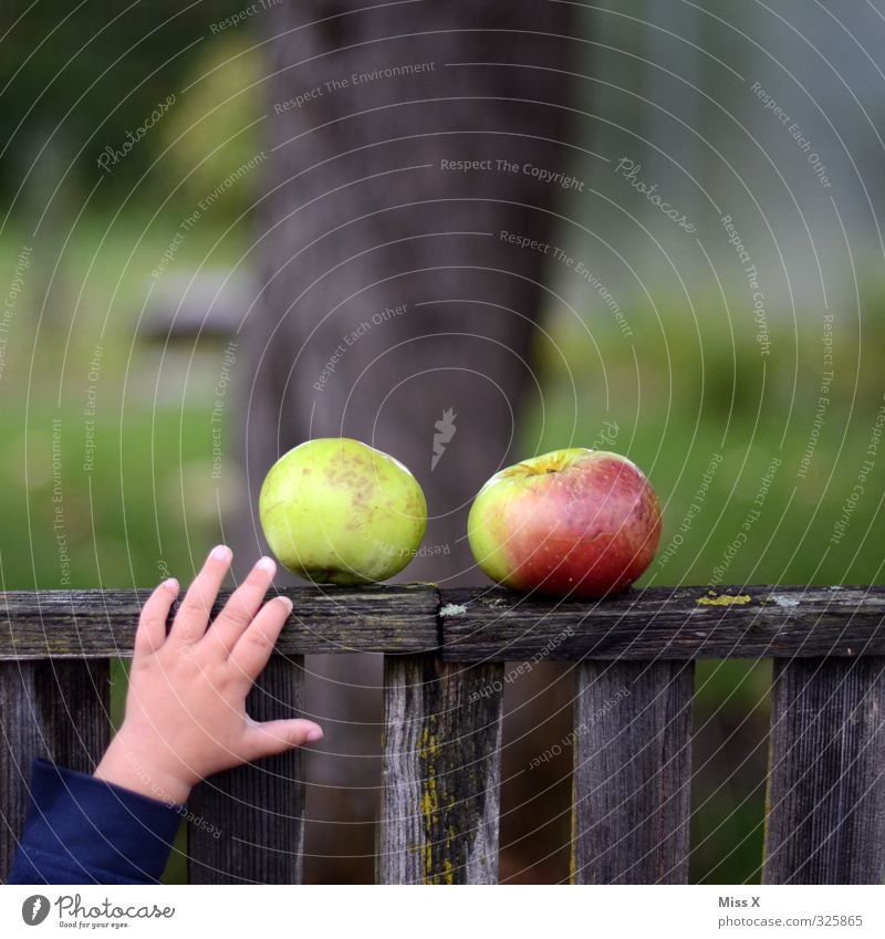 Human being Child Hand Emotions Autumn Healthy Garden Food Infancy Fresh Fingers Nutrition Sweet Appetite Apple Fence