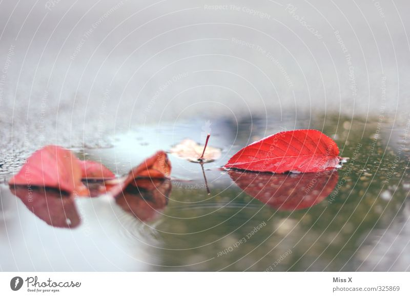 Autumn Water Bad weather Rain Leaf Wet Red Autumn leaves Puddle Street Colour photo Multicoloured Exterior shot Deserted Copy Space top Copy Space bottom