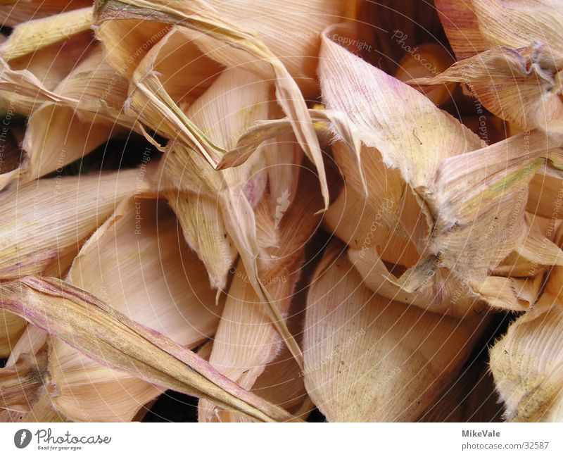 corn leaf Leaf Dry Maize Dried Macro (Extreme close-up) Vegetable Structure