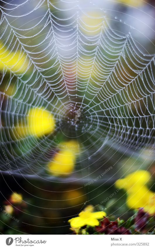 net Animal Spider Nature Network Spider's web Blossom Dew Drops of water Colour photo Multicoloured Exterior shot Close-up Pattern Deserted Copy Space top