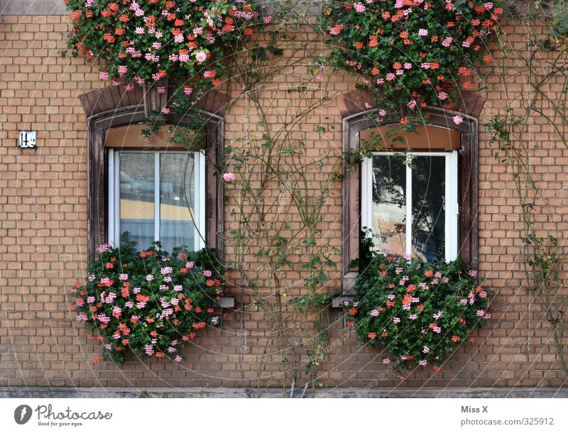 façade Living or residing Flat (apartment) Dream house Redecorate Flower Old town House (Residential Structure) Window Blossoming Hang Geranium Balcony plant