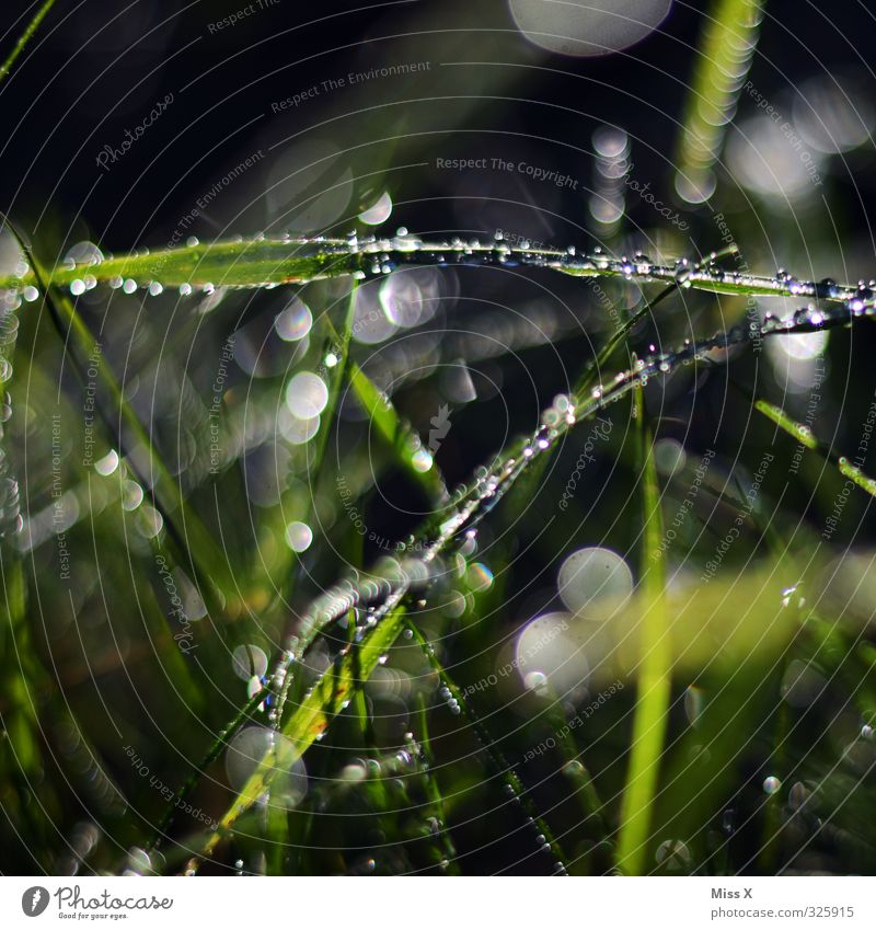 dew drops Drops of water Weather Beautiful weather Bad weather Rain Grass Leaf Meadow Wet Growth Dew Morning Blur Glittering Point Colour photo Multicoloured