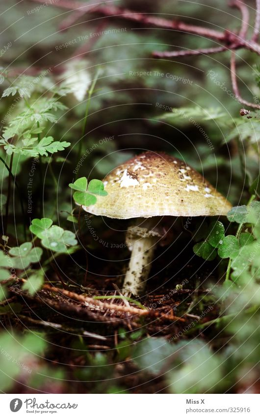 mushroom Food Nutrition Organic produce Autumn Forest Growth Collection Mushroom Mushroom cap Mushroom picker Button mushroom Woodground Edible Colour photo