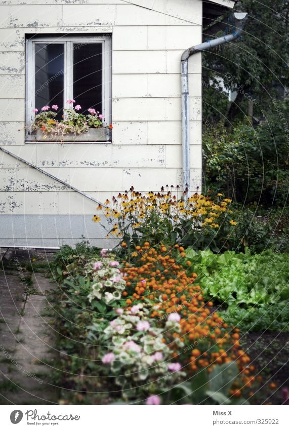 farm Living or residing Flat (apartment) Garden Redecorate Summer Plant Flower Blossom House (Residential Structure) Hut Wall (barrier) Wall (building) Window