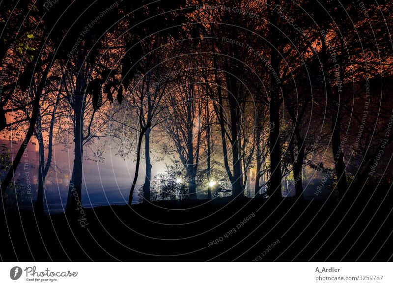 Lights in the night Nature Landscape Plant Tree Row of trees Garden Park Forest Hill Discover Creepy Blue Pink Red Black Emotions Moody Fear Adventure