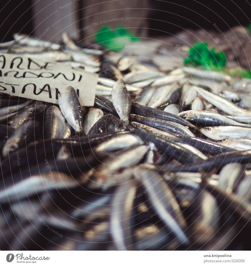 Fresh fish Food Fish Nutrition Organic produce Animal Dead animal Scales Group of animals Natural Markets Colour photo Exterior shot Detail Copy Space top