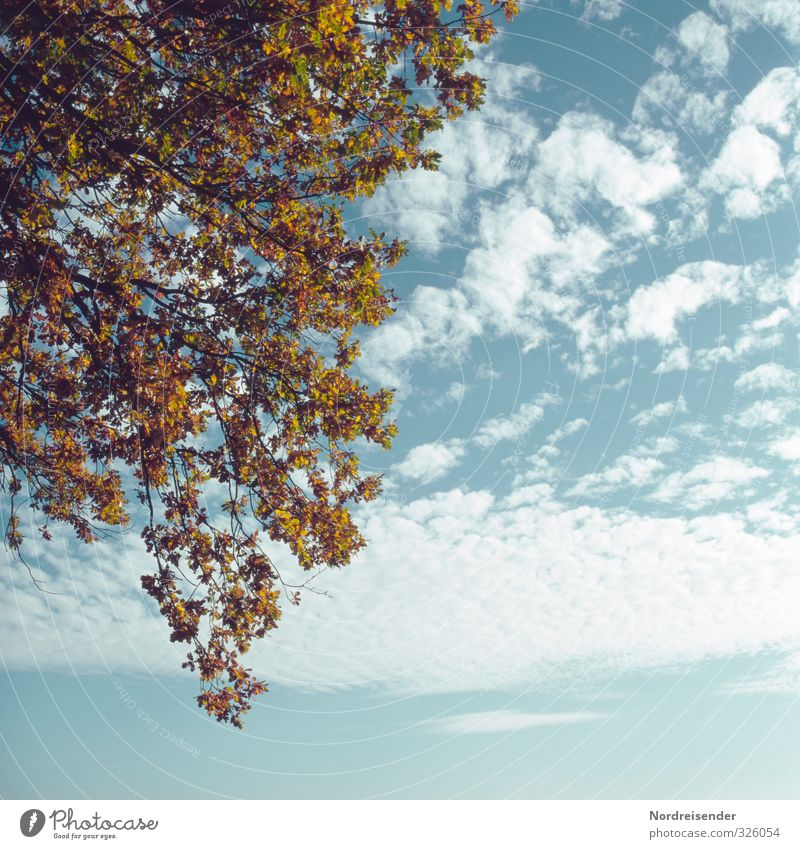 Sky Nature Blue Plant Colour Tree Calm Clouds Autumn Natural Climate Beautiful weather Transience Change Dry Autumn leaves