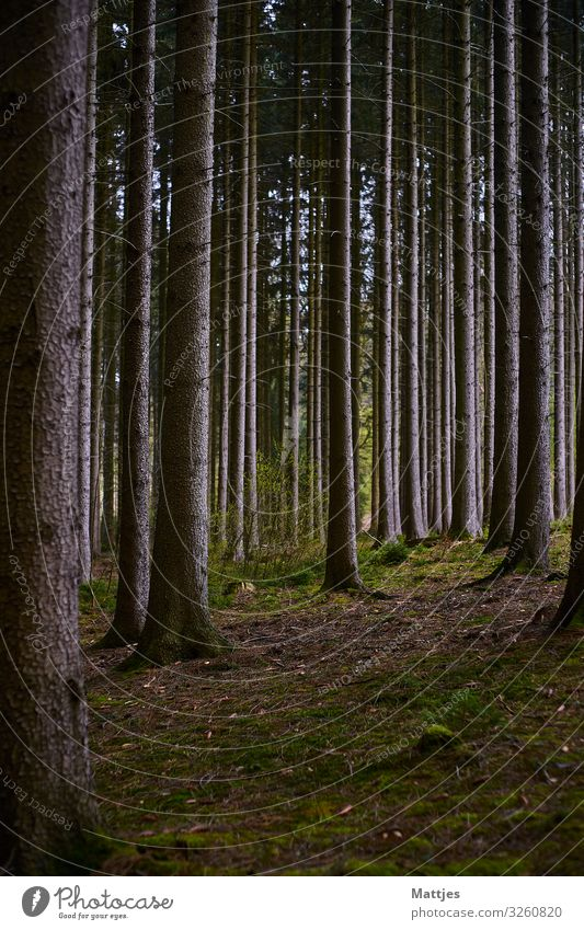 Sometimes you can't see the forest for the trees. Trip Adventure Hiking Nature Landscape Beautiful weather Tree Forest Deserted Wood Tree trunk Discover