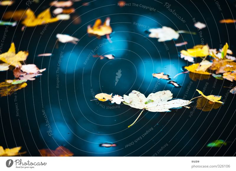 Nature Blue Water Landscape Leaf Yellow Environment Autumn Lake Weather Gold Beautiful weather Elements Transience Seasons Float in the water