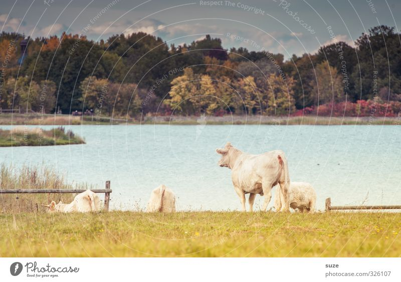 Sky Nature Summer Landscape Animal Forest Environment Meadow Lake Natural Idyll Group of animals Lakeside Pasture Longing Fence