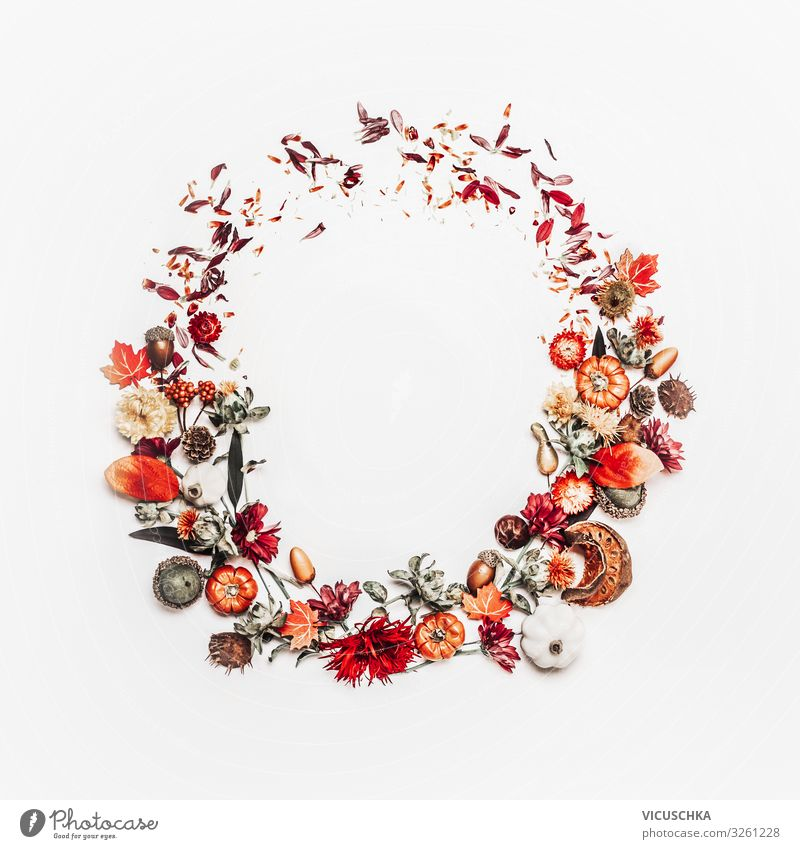 Beautiful autumn wreath or circle frame made with pretty fall leaves, chestnuts, nuts, acorns and flowers on white background. Top view. Flat lay. Creative layout