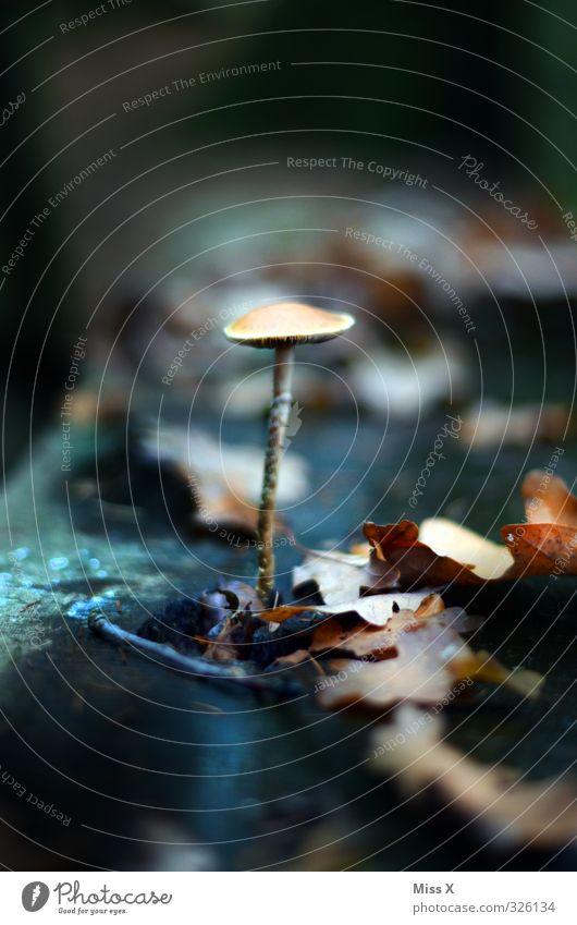 Nature Plant Leaf Forest Dark Autumn Food Growth Nutrition Stalk Autumn leaves Mushroom Autumnal Poison