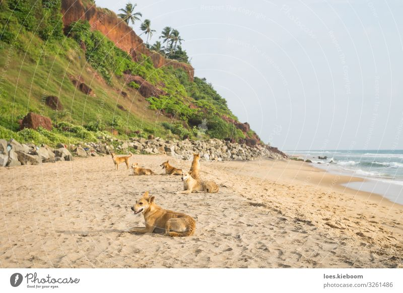 Tropical dog family Relaxation Vacation & Travel Summer Summer vacation Sunbathing Beach Ocean Nature Sand Foliage plant Wild plant Virgin forest Waves Coast