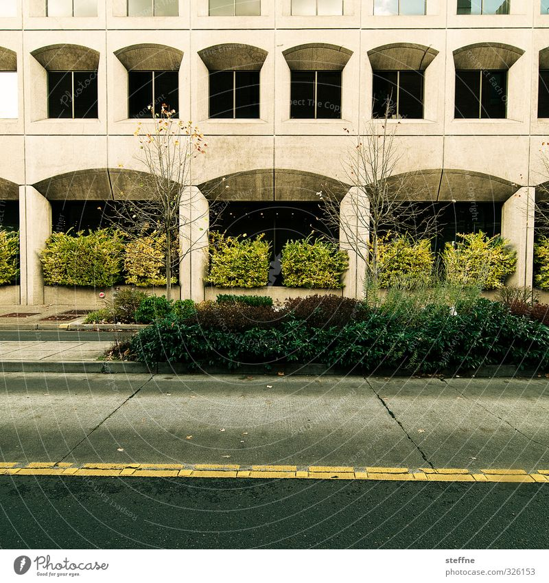 naturban Tree Bushes eugene USA Town Downtown House (Residential Structure) High-rise Bank building Wall (barrier) Wall (building) Facade Window Street