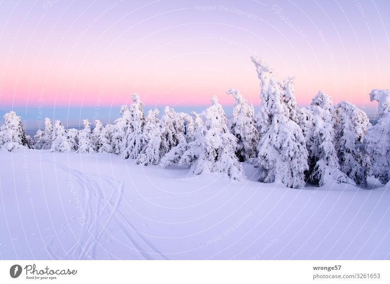 Brocken summit in winter VIII Nature Landscape Plant Sky Cloudless sky Winter Tree Spruce Spruce forest Forest Mountain Harz Tall Cold Blue Violet White Peak
