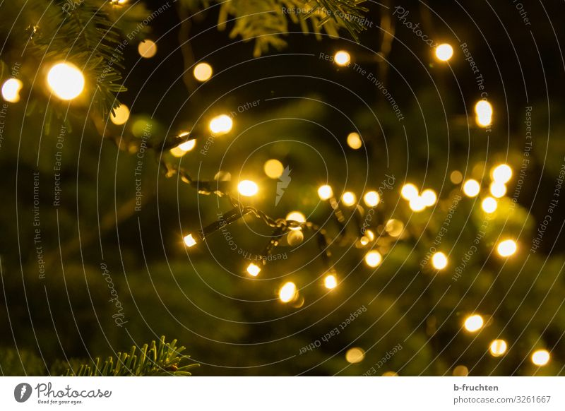 christmas time Lifestyle Style Senses Night life Entertainment Feasts & Celebrations Christmas & Advent New Year's Eve Tree Illuminate Positive Sympathy Love