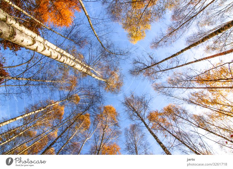 Sky Nature Plant Blue Landscape Tree Leaf Calm Forest Autumn Yellow Natural Exceptional Bright Fresh Gold