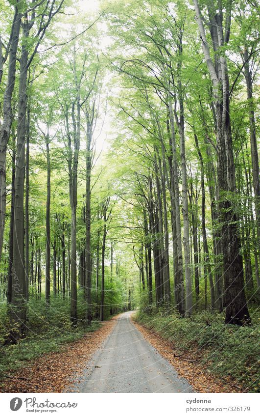 forest path Harmonious Relaxation Vacation & Travel Trip Adventure Far-off places Hiking Environment Nature Landscape Summer Tree Forest Lanes & trails