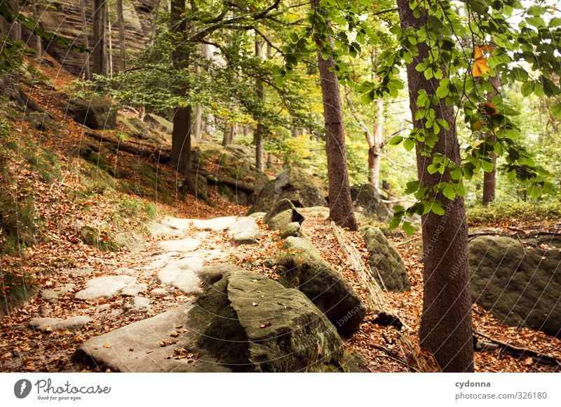 stony road Well-being Calm Vacation & Travel Trip Adventure Freedom Mountain Hiking Environment Nature Landscape Autumn Tree Forest Rock Idyll Curiosity