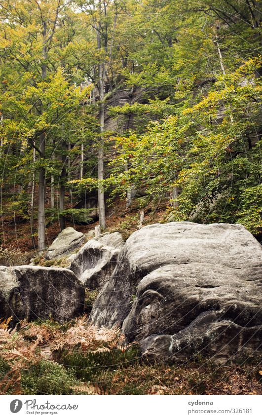 Rocky Harmonious Relaxation Calm Vacation & Travel Tourism Adventure Expedition Hiking Environment Nature Landscape Autumn Tree Forest Mountain Loneliness