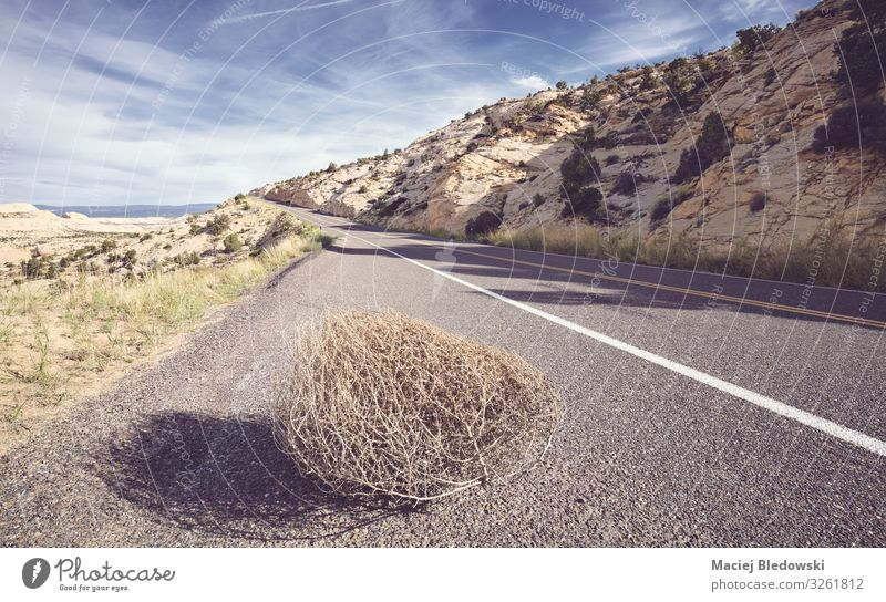 Tumbleweed on a road, USA. Vacation & Travel Tourism Trip Adventure Far-off places Freedom Cycling tour Summer Nature Landscape Sky Street Highway Discover
