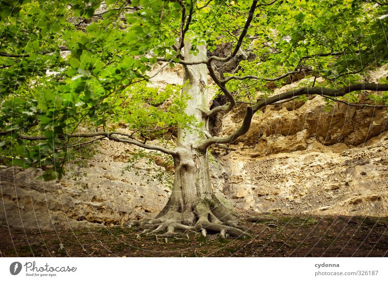 tree of life Healthy Life Relaxation Calm Hiking Environment Nature Summer Tree Forest Rock Mountain Uniqueness Experience Eternity Freedom Hope Idyll Complex