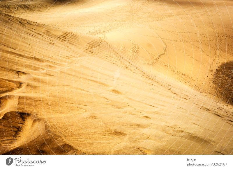 desert Nature Landscape Sand Summer Beautiful weather Warmth Desert Dry Brown Yellow Gold Far-off places Beach dune Dune Colour photo Exterior shot Deserted Day