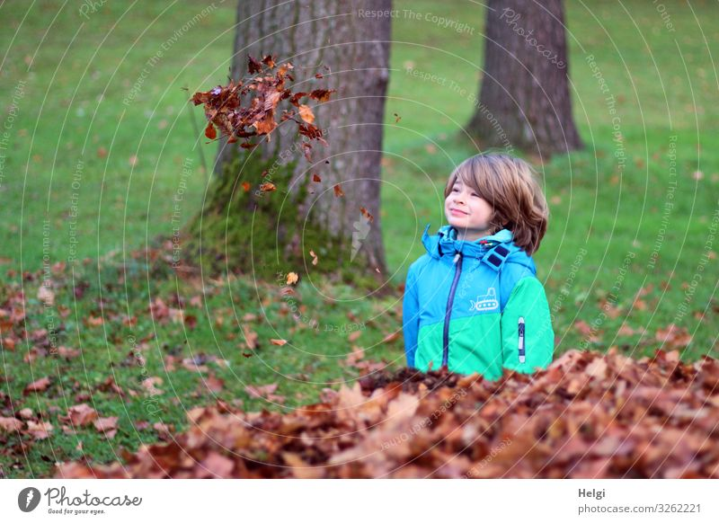 friendly boy stands on a meadow and looks for floating autumn leaves Human being Masculine Child Infancy 1 3 - 8 years Environment Nature Plant Autumn Tree