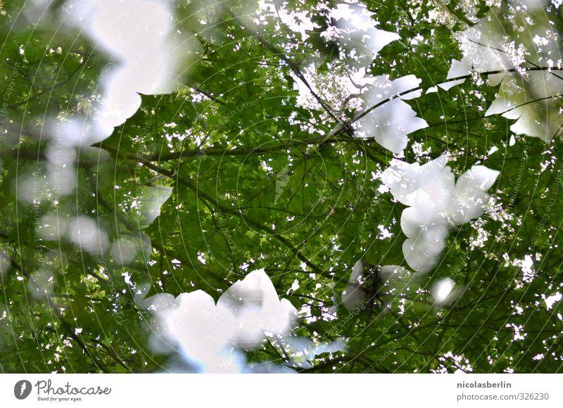 Nature Beautiful Green Plant Tree Leaf Forest Park Large Beautiful weather Esthetic Soft Sustainability Double exposure Foliage plant
