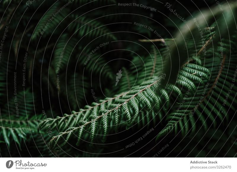 Natural pattern with fern leaves tropical background natural green plant nature new zealand foliage forest botany eco twig beautiful decorative botanic biology