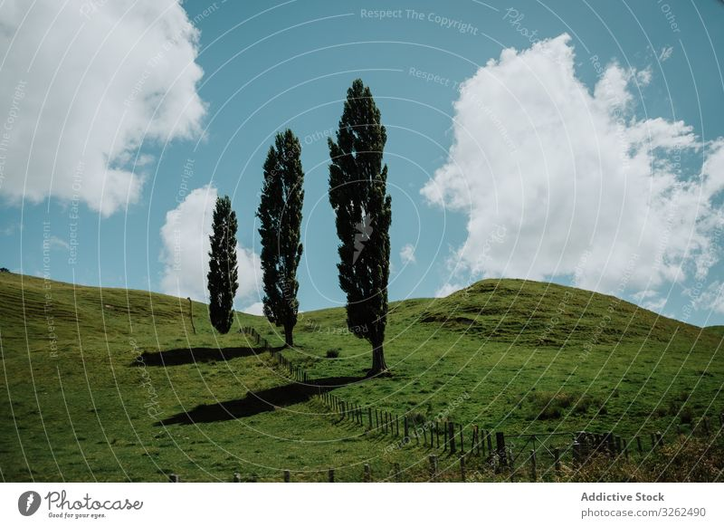 Trees on green hills in New Zealand tree meadow valley cloud new zealand sky blue landscape lombardy poplar calm quiet fence wooden low corral pasture summer
