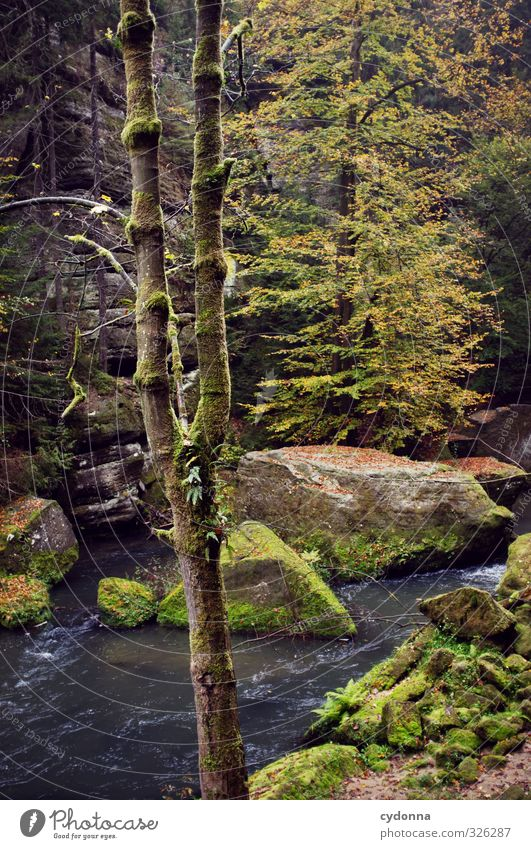 wilderness Vacation & Travel Trip Adventure Hiking Environment Nature Landscape Autumn Tree Forest Rock Brook Uniqueness Experience Freedom Mysterious Idyll