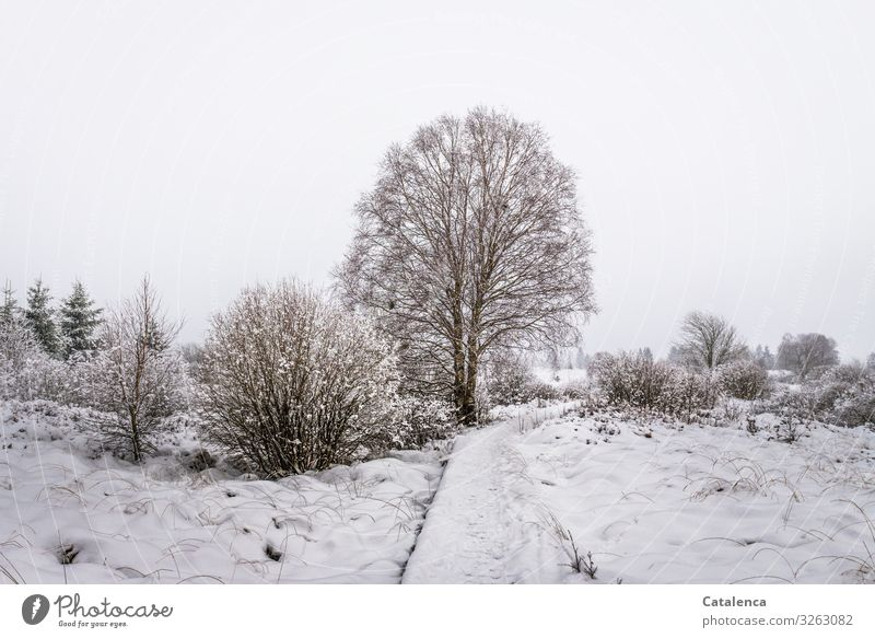Sky Nature Plant White Landscape Tree Winter Cold Lanes & trails Snow Meadow Brown Gray Moody Ice Field