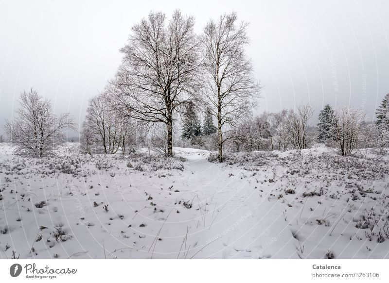 It has snowed Winter Snow Hiking Nature Landscape Plant Sky Bad weather Ice Frost Tree Bushes Bog High venn Lanes & trails Cold Natural Brown Gray Green White