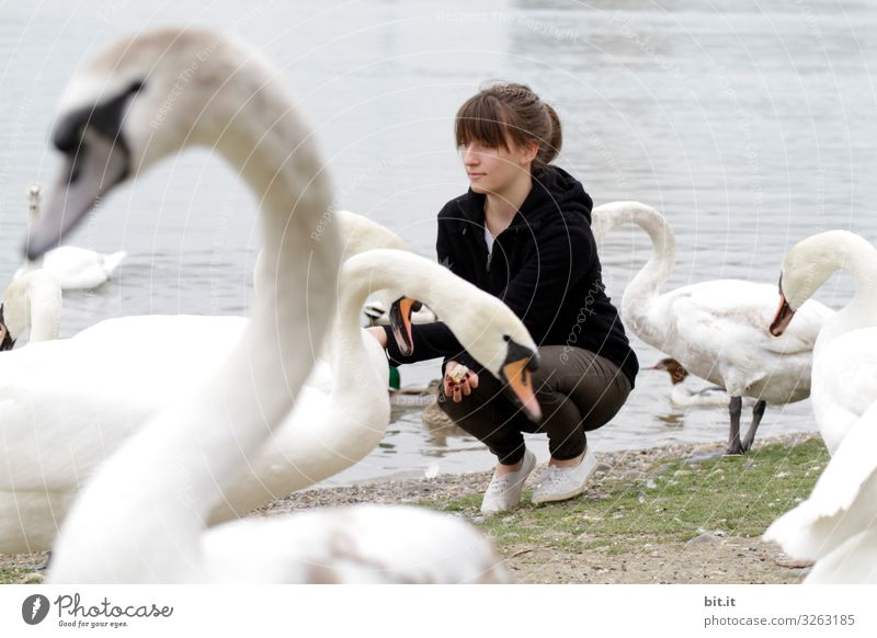 Young woman feeding swans on the shore. Vacation & Travel Tourism Trip Adventure Freedom Beach Human being Feminine Youth (Young adults) Environment Nature